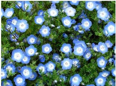 Какие цветы на северном балконе